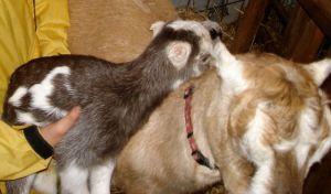 Batty cozies up to his mom, Rhubarb
