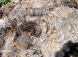 Silver and grey fleece from Norma's ram lamb