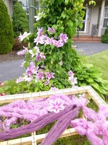 Locks and yarn drying (very dramatically in front of the clematis!)
