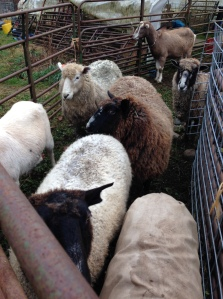In the worming pen