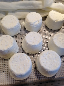 Chèvre almost ready