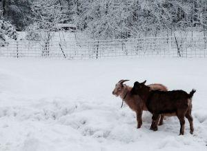 Bucklings in the snow