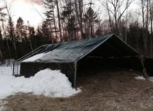 Girls' greenhouse, almost totally free of snow