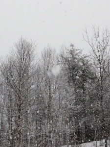 This morning. Flakes as big as dinner plates (Thanks, Pam, for that description!)