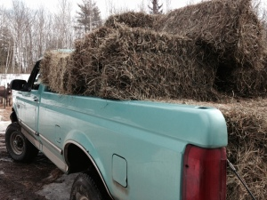 Ready to unload the hay
