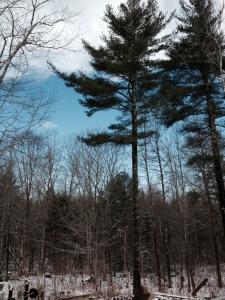Blue skies return