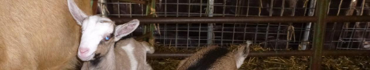 Ruit Farm Web Journal