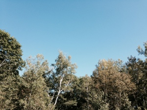 Blue Friday sky