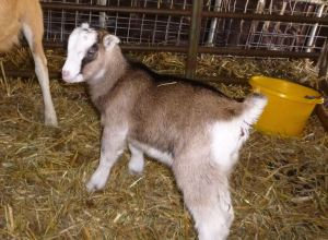Baby Iris, one of Zelda's girls. April 2014