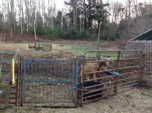 New paddock fence line