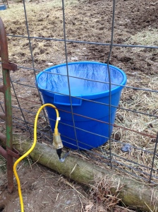 Happiness is a heated water bucket!