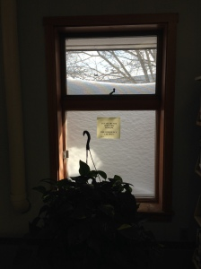 Snow is so high we can't see out the library windows!