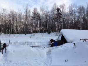 Snow cave central.  Can barely see the fences anymore.