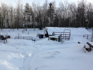Our greenhouse is slowly disappearing under the snows
