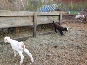 Pippi's babies having some fun