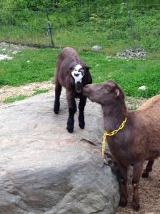 Beezus and our little man, having a moment at the rock (gratuitous goat photo)