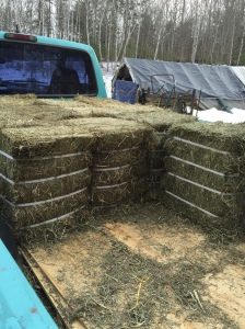 Compressed hay bales