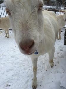 SnowPea is a nosy noodle!