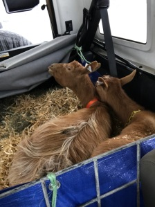 Dorcas and Delta doing their relaxing in the back of the Jeep