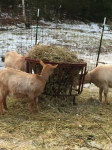 Betsy, Saffron and Battie get working on breakfast