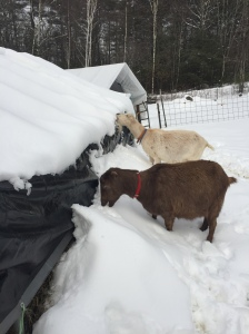 Pippi and her daughter Beezus, having a go at the new snow