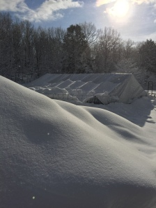 Drifts and piled up snow out near the goat paddocks