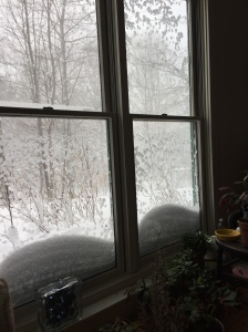 Looking out the living room window to the west, where the almost 5' tall Rugosas are looking like dwarves in the drifting snow